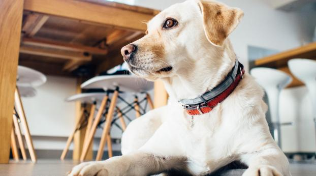 Bien-être au travail : et si on amenait notre animal au bureau ?