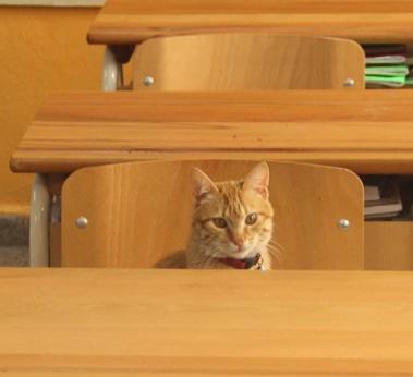 TOMBI, le chat le plus STUDIEUX du monde