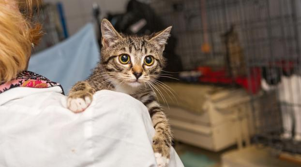 Ce chaton DISPARU fait une immense SURPRISE à sa famille