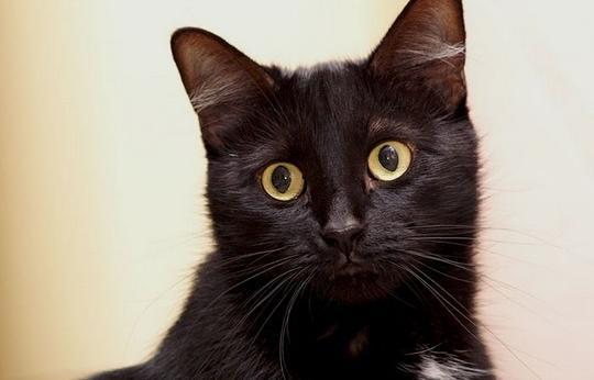 Devinez où s'était COINCÉ ce chat SAUVAGE !