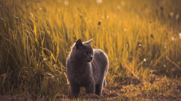 Découvrez la chatière qui reconnaît ENFIN votre chat ! #JamesBond