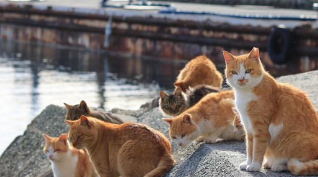 CATS ADDICT : les plus BEAUX endroits du MONDE à visiter