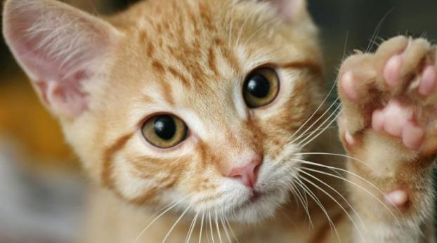 VIDÉO : un chat fait face à un agresseur INSOLITE