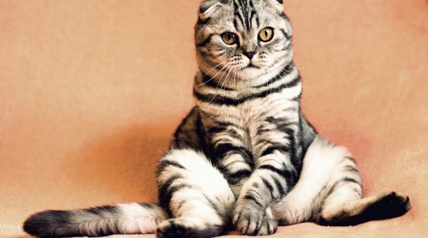 Mon chat traîne les PATTES, c'est GRAVE ?