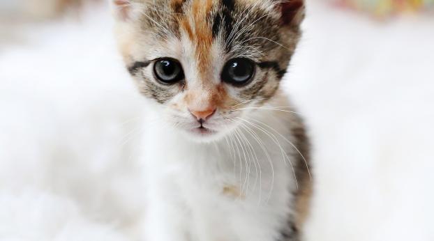 Participez à cette INITIATIVE, les chats vous le REVAUDRONT !