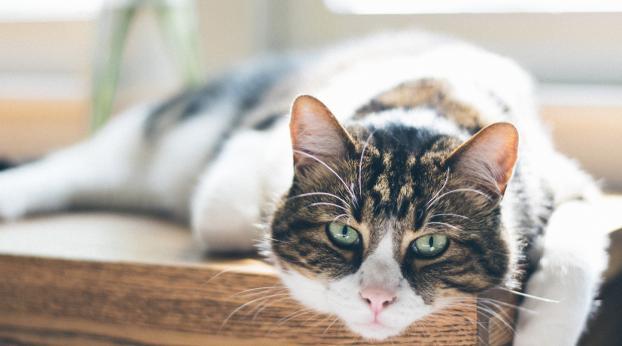 Le premier chat du MONDE a avoir été soigné d'une TUMEUR !