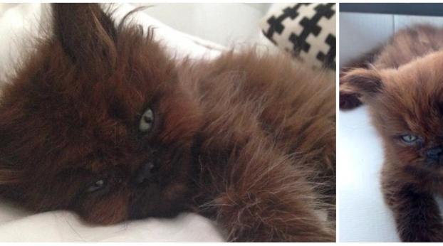 Elle adopte un petit chat, et un an plus tard, la différence est impressionnante !
