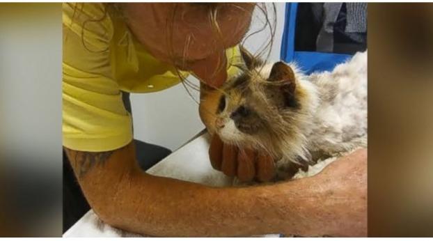 Les retrouvailles de cette petite chatte aveugle avec son maître vont vous faire pleurer !
