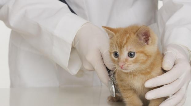 Ce trouble DIGESTIF du chat peut devenir un CANCER