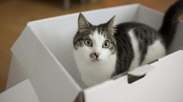 Ce chat était en réalité... un ESPION !